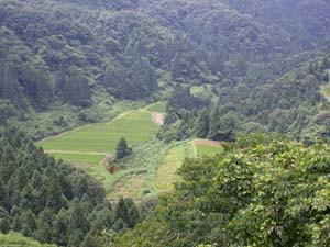 塔倉山林道