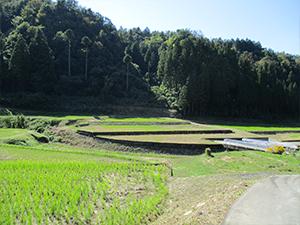 虫谷の田園風景