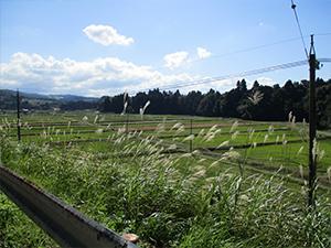田園風景-谷口1